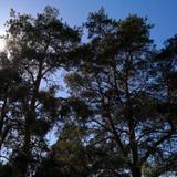 Charming Pine View Apartment — фото 3
