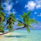 Гостиница Maafushi — фото 2