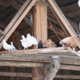 Печки-Лавочки — фото 1