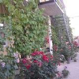 Guest House u Timura — фото 2